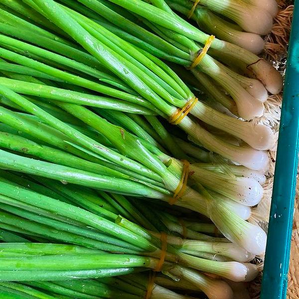 Chris Huskins Spring Onions