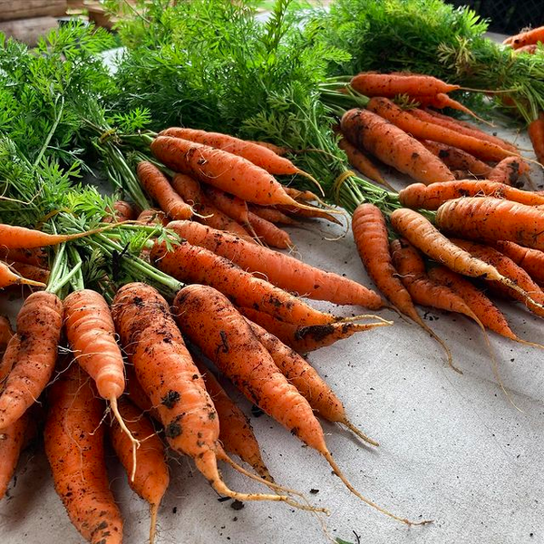 Chris Huskins Carrots